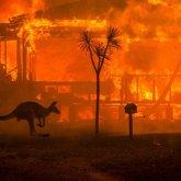 Катастрофа в Австралии: пожары уничтожили более миллиарда животных