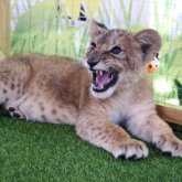 Контактный зоопарк закроют в Алматы