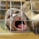 Контактный передвижной зоопарк возмутил шымкентских волонтеров