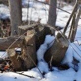 Дело о массовой вырубке деревьев: застройщик пошел на попятную