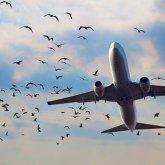 Авиарейсы для возврата казахстанцев домой организуют власти