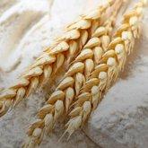 Казахстан отменит ограничения на экспорт муки, зерна и продтоваров