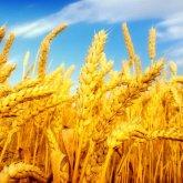 Казахстан может стать одним из мировых продуктовых хабов – Аскар Мамин