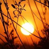 Порывистый ветер и температуру в плюс 40 градусов прогнозируют синоптики в РК