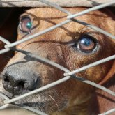 «Как ты спишь по ночам, нелюдь?» – зоозащитники требуют отправлять за решетку мучителей животных