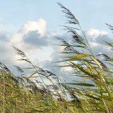 Штормовое предупреждение объявлено в Шымкенте и двух областях