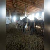 Водитель наехал на лошадей на трассе в Павлодарской области
