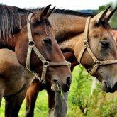 Шесть прошлогодних краж скота раскрыли в Атырауской области