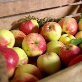 Более 88 тонн продуктов из Казахстана и Кыргызстана не пропустили в Россию