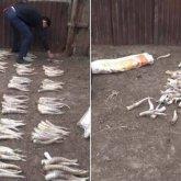 172 сайгачьих рога изъяли у жителя Западно-Казахстанской области