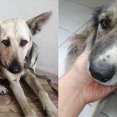 Изнасилование собак в Нур-Султане: полиция возбудила уголовное дело