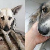 Изнасилование собак в Нур-Султане: директор «Астана Ветсервис» отстранен от работы