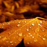 Дожди и похолодание ожидаются на большей части Казахстана