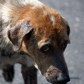 Шокирующие подробности насилия над животными в столичном приюте раскрыли блогеры