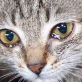 Заживо жгут кошек в Алматинской области