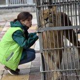 Дом для Симбы: льву из Актау начали строить вольер в алматинском зоопарке
