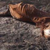Лошади гибнут от болезни в Кызылординской области