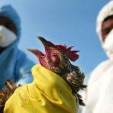 В Минсельхозе заявили о прекращении падежа птицы в ряде регионов