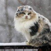 Синоптики предупреждают о выпадении снега в Казахстане