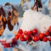 Какой будет погода в ноябре, рассказали синоптики