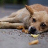 Голодная смерть грозит животным из осиротевшего приюта в Алматы