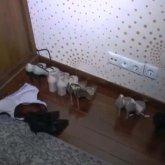 Cекс-притоны ликвидировали в Алматы