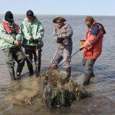 Останки 18 тюленей нашли у берегов Каспия