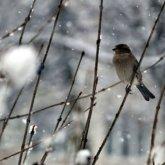 Дожди и снег ожидаются в Казахстане