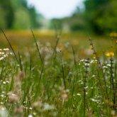 Сотни тысяч гектаров сельхозземель зарастают сорняками в Павлодарской области