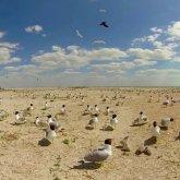 Десятки птиц погибли в Атырауской области
