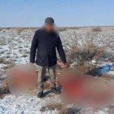 Сельчане убивали лошадей на пастбищах в Туркестанской области