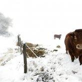 Виновного в загадочной гибели животных назвали чиновники Атырауской области