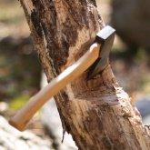 Штрафы за незаконную вырубку деревьев многократно увеличат в Казахстане