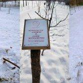 Алматинцы поломали деревья на аллее журналистов