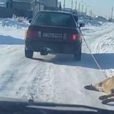 Автомобиль тащил собаку близ Нур-Султана