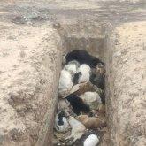 Заполненную гниющими трупами собак яму обнаружили в пригороде Актау