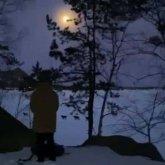 Очевидцы сняли волчью стаю на камеру в Боровом