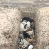 Сельского госслужащего наказали за брошенные трупы собак в пригороде Актау