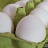 «Все мы видим»: рост цен на яйца и мясо птицы возмутил сенатора