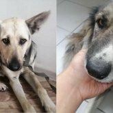 Изнасилование собак в Нур-Султане: подозреваемых нет