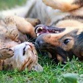Уголовную ответственностьза жестокое обращение с животными в РКхотят ввестис 14 лет