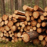 Очередная незаконная вырубка деревьев произошла в Алматы