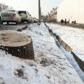 Вырубка деревьев у Sulpak: подсудимая частично признала вину