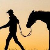 За кражу скота на 36 млн тенге задержан пастух в Жамбылской области
