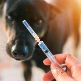 Первую в мире вакцину против COVID-19 для животных зарегистрировали в России