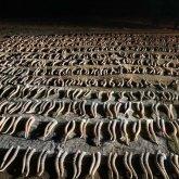 Более 800 рогов срезали с сайгаков трое жителей ЗКО