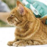 Вакцину против коронавируса для животных создадут в Казахстане
