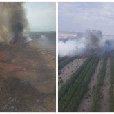 Сосновый бор горит в Павлодарской области