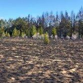 Лесной пожар в Павлодарской области ликвидирован