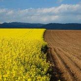 Глава аграрного совета при Nur Otan Берик Оспанов: информация о предоставлении сельхозземель иностранцам – полная ложь!